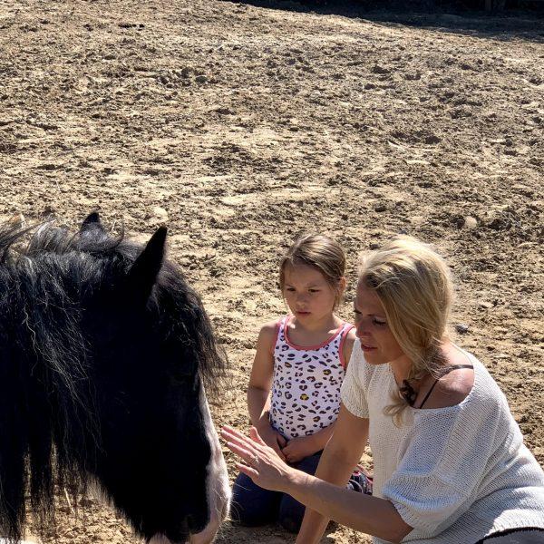 Paarden-Coaching
